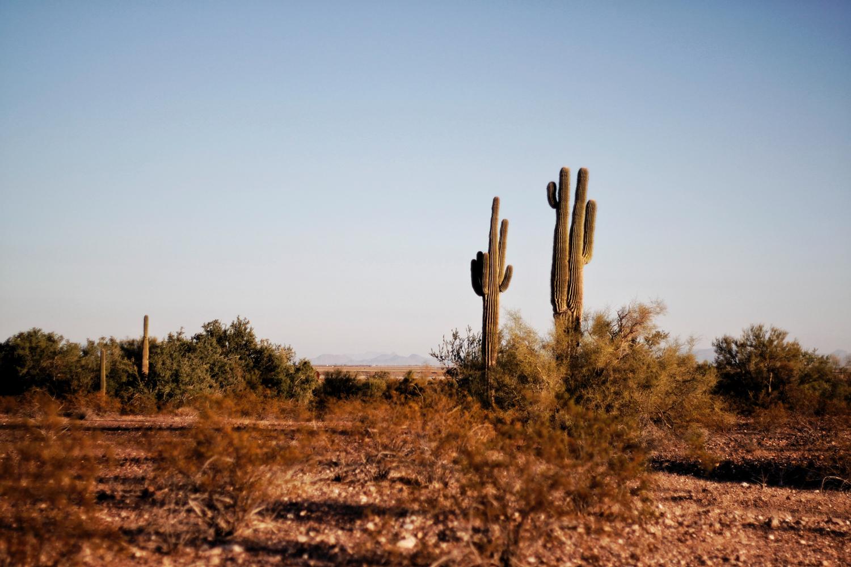 airbnb/Phoenix AZ